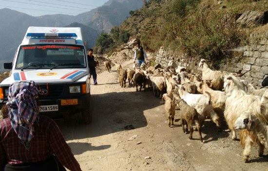 Five Mobile Veterinary Vans for Shepherds Launched on the State Foundation Day of Uttarakhand