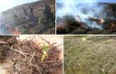 Management of Rangelands Through Controlled Shrub Burning