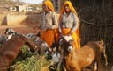 Community-Based Insurance for Goats - Experiences and Learning from Ibtada, Alwar