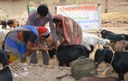 Empowering Women for Backyard Poultry and Goat Based Livelihood Improvement