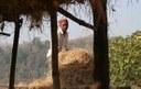 हे द्वारा चारा संरक्षण (Use of green fodder for hay making)