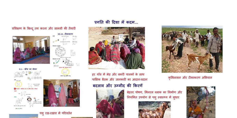 http://sapplpp.org/photogallery/about-sa-pplpp/Panel-goat-sheep-pilot-in-Nagaur/image_view_fullscreen