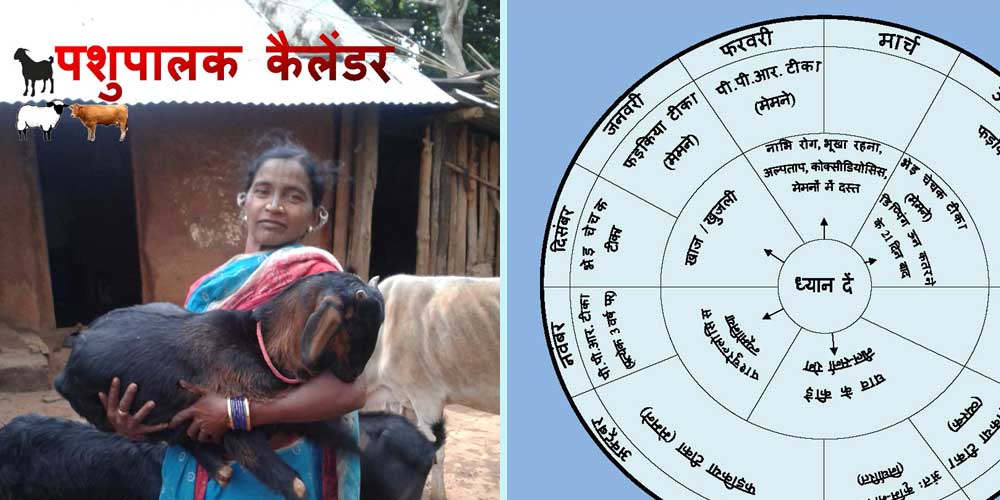 http://sapplpp.org/rearing-and-management-practices/small-ruminants/pashu-palak-calendar
