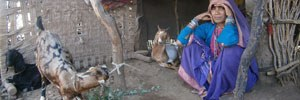 Goat Rearing - A Compilation of Case Studies from Khargone, Madhya Pradesh